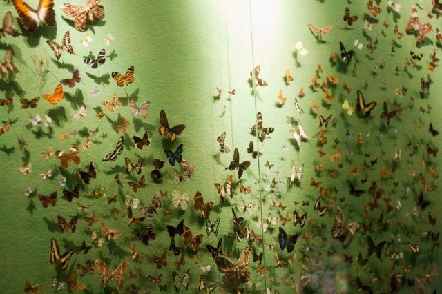 butterflies_naturhistoriska_sthlm