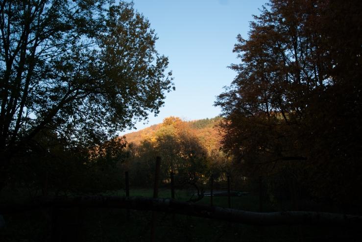 Höstfärger Königstein